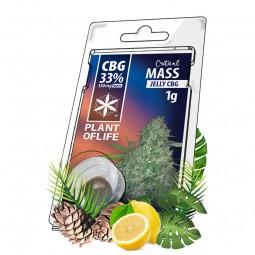 jelly critical mass cbg