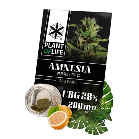 acheter pollen cbg amnesia