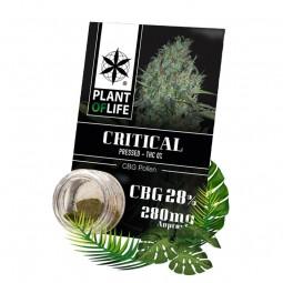 pollen cbd 28% critical